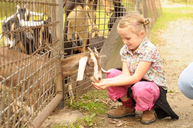 Stay Healthy at Animal Exhibits