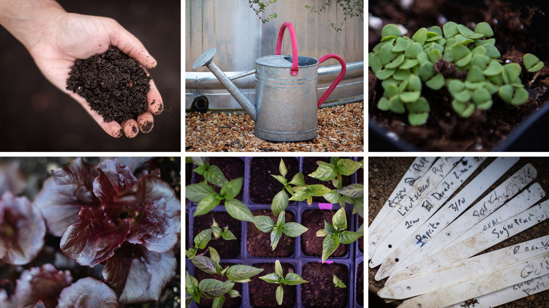How To Start A COVID Victory Garden